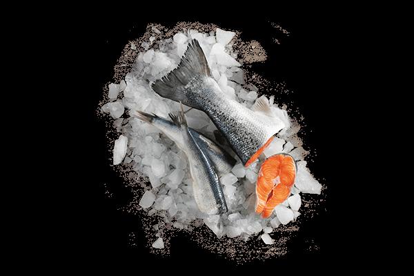 Zutaten-Lachsfisch
